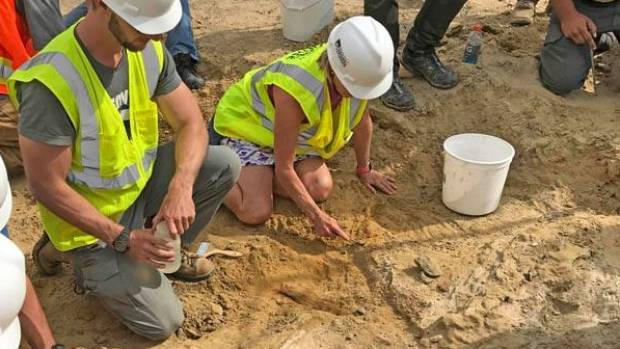 Colorado construction crews unearth triceratops skeleton