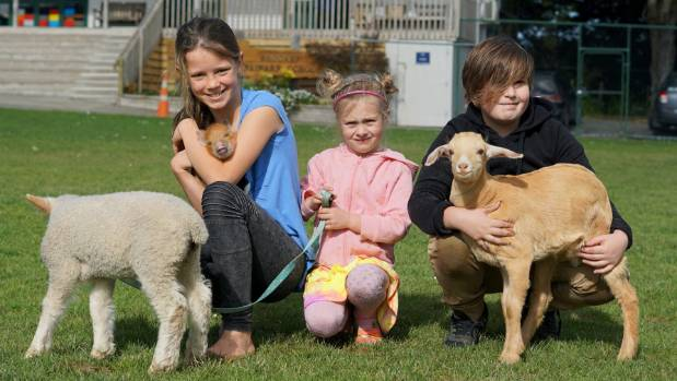 Brookby Primary School kids are looking forward to their annual Ag Day: Kaitlyn Bingham and her pig Pumba, Sophia Harris ...