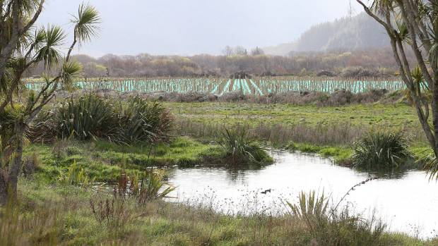 A wetland next to a vineyard development on a Gill Construction property near Wairau Valley flanked by cabbage trees.
