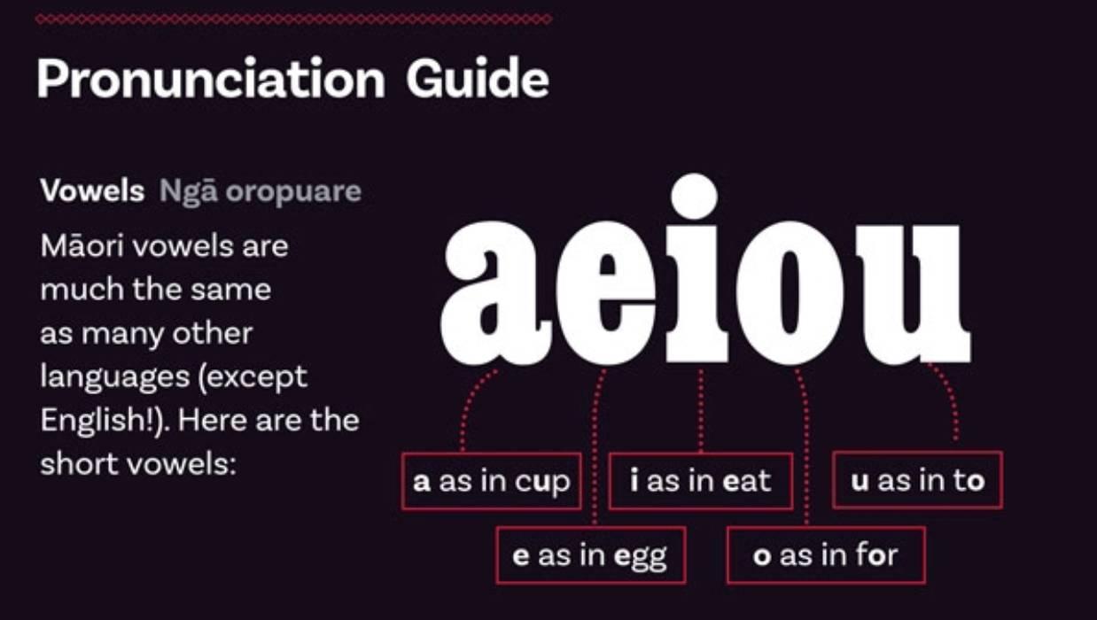 Taking te reo Māori back to basics  Stuff.co.nz