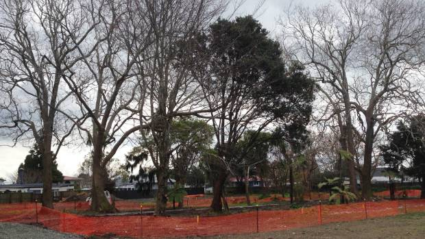 The three trees on the left were cut down due to mistakes in the Auckland Council's mapping system.