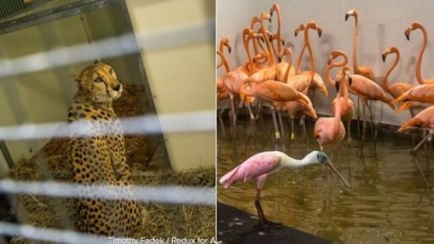 Zoo animals ride out storm as Irma rips through Florida