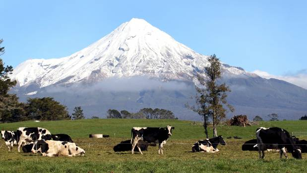 Cleaning up Taranaki's waterways to met Ministry standards might require reducing the number of cows on the ringplain.