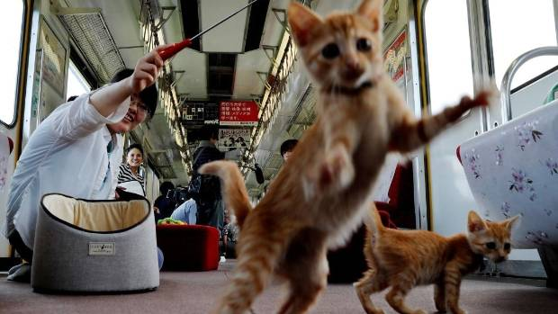 A passenger plays with one of the feline passengers.
