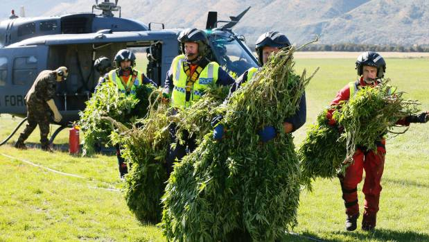 A police and Royal New Zealand Air Force team with cannabis recovered during an aerial operation in the Wairau Valley, ...