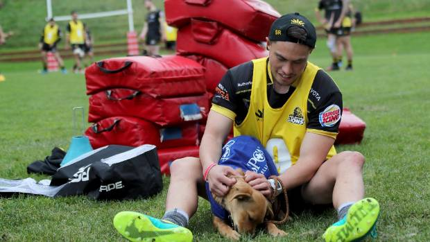 Lions halfback Sheridan Rangihuna enjoys a spell with an SPCA pooch during training in Newtown on Tuesday.