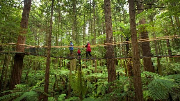 Far from a boring boardwalk, the Redwood Treewalk gives you a bird's eye view of the forest.