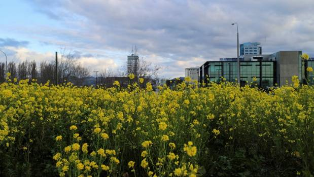 Let 39 s grow a healthy city in christchurch the garden city for Grow landscapes christchurch
