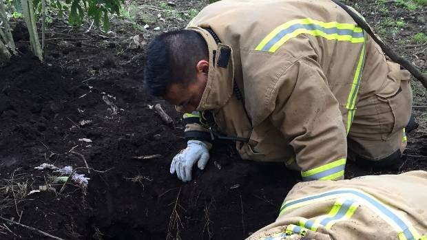 Firefighter Pio Afemata searches for the stuck dog.