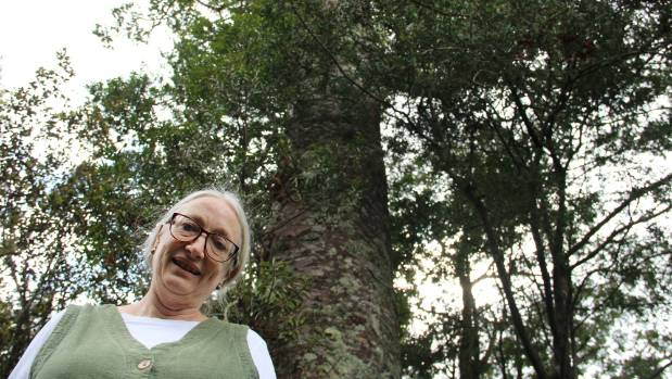 Titirangi resident Dinah Morris want Auckland Council to reinstate the two kauri trees' SEA protection.