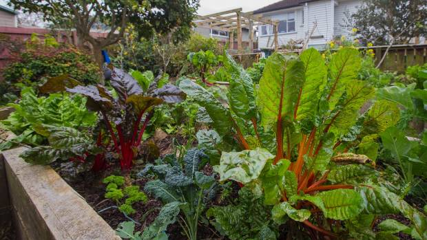 Thompson's raised beds, which she built herself, are full of goodness.