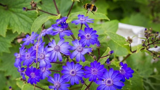 Thompson loves flowers that bring bees, which is good for pollination.