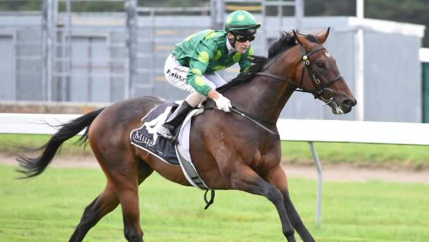 Talented galloper Hiflyer and jockey Johnathan Parkes are lining up at Ruakaka on Saturday.