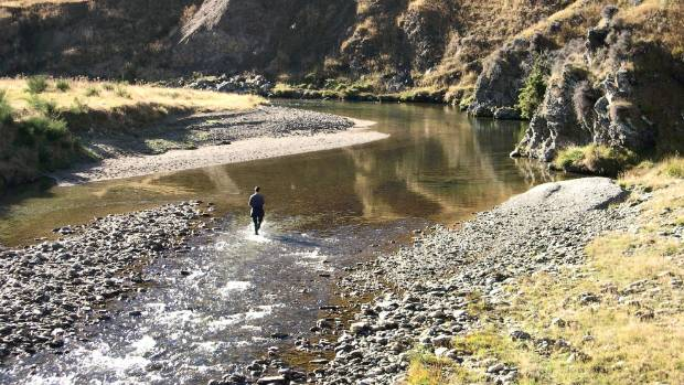 Are the days of hooking a trophy trout on a Southland river numbered?