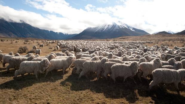 Initiatives such as creating the Alpine Silere brand based on the merino have been welcomed by Rabobank in its new report.