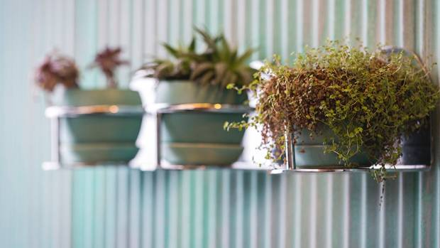 Pot plants are kept simple and easy-care.