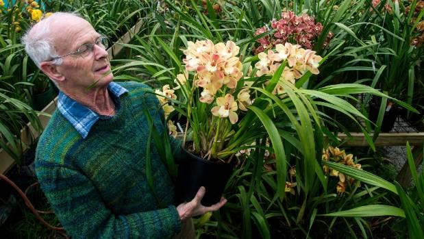 "Orchid grower Allan Rae with ""Kiwi Splash"", reserve champion at the Taranaki orchid show."