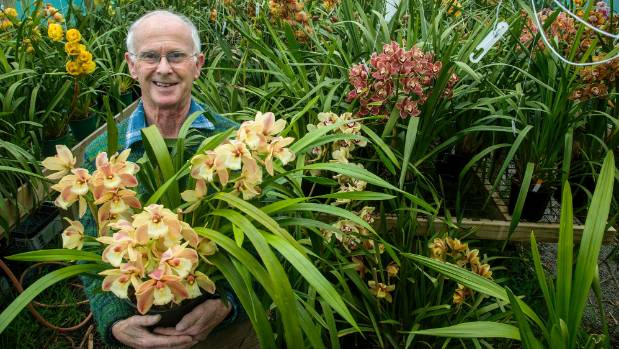Orchid grower and breeder Allan Rae with some of his 2000-odd cymbidiums.