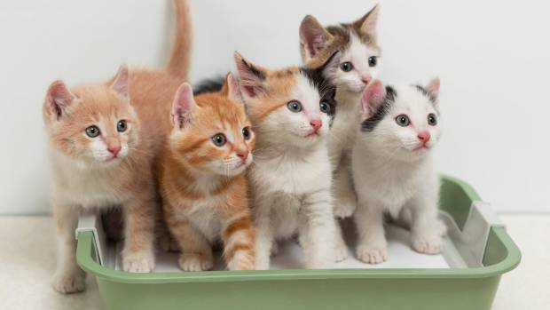 How often should cats urinate per day