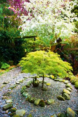 A Japanese maple stands inside a stone koru, flowering crabapple behind.