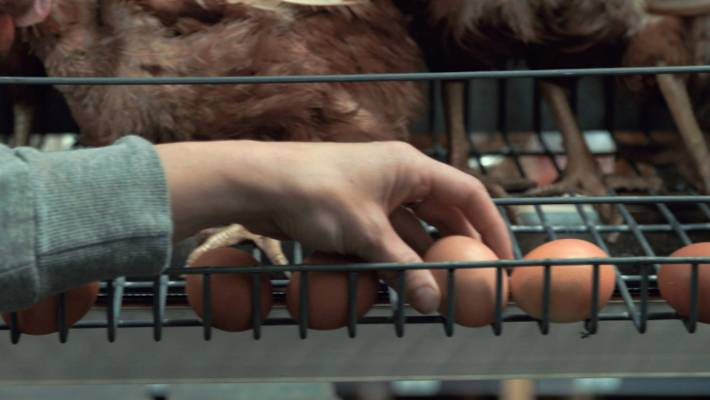 73a1a3165fa Safe advertisements have been putting years of pressure on supermarkets to  stop selling eggs from caged