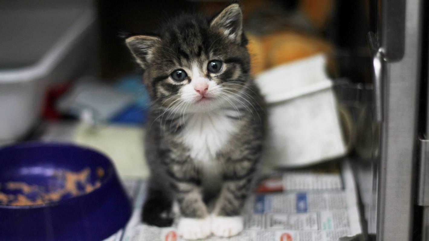 bracing for peak kitten at waikato spca