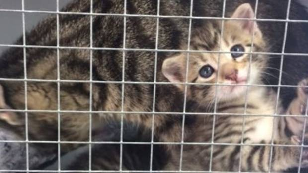 The SPCA needs specialist cat cages to be used in quarantine units, isolation wards and the communal adoption area.