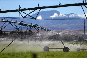 Farmers with shares in an irrigation scheme may lease their land to use shares.