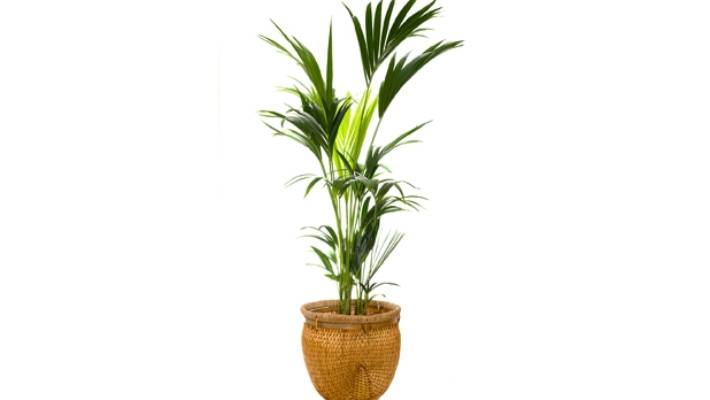 The Top Five Indoor Plants That Will Give Back The Most Love Stuff Co Nz