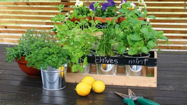 A pretty planter box of herbs is handy in the kitchen.