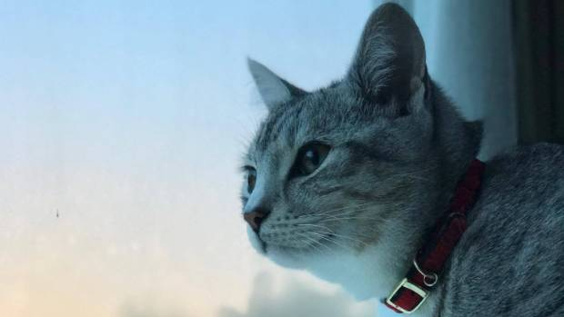 Bird watching is part of Zeus' morning routine, and is probably his favorite passtime.