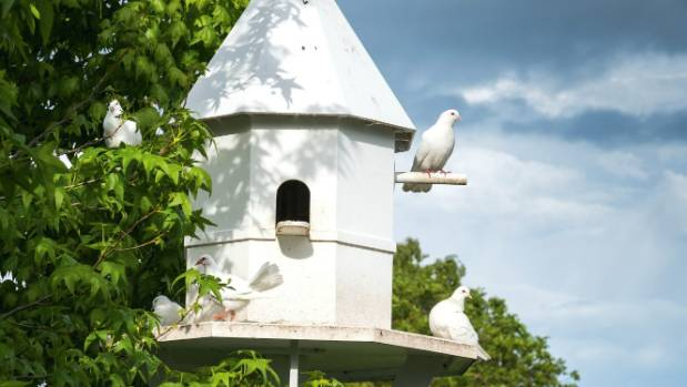 "The dovecotes are for the white fantail pigeons: ""People love seeing them,"" says Sue."