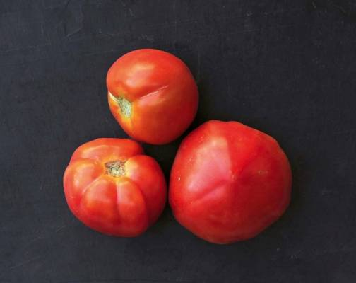 'Beef Maestro': An F1 hybrid with large fruit weighing 111g on average. Slow off the mark (it took 23 weeks from seed ...