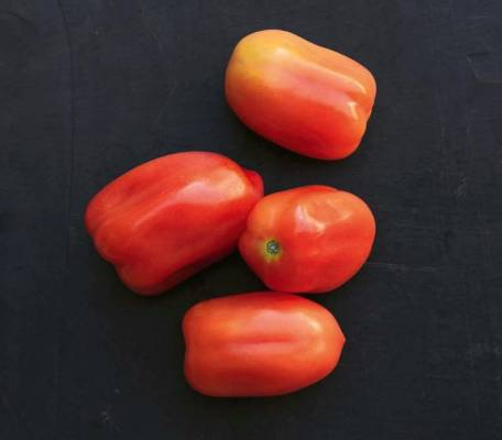 'Roma': This Mediterranean paste tomato struggles down under. I don't know anyone, including commercial growers with all ...