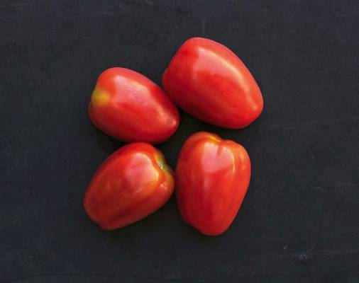 'Juliet': The tallest and most vigorous of the medium-sized tomatoes, 'Juliet' grew to 2.13m. This F1 hybrid took 20 ...