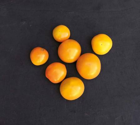 'Sweet Gold': Managing only a 50 per cent pass mark, this F1 hybrid golden cherry tomato took 19 weeks to harvest and ...