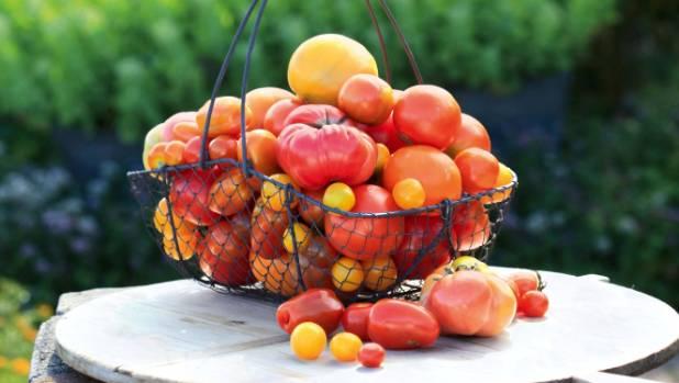 Lynda Hallinan shares helpful hints for bigger, better tomato crops.