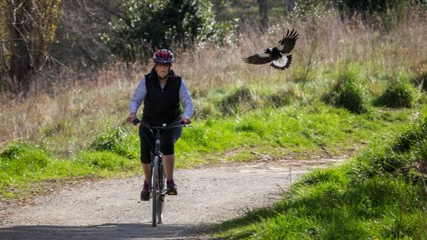 Shirley Halkett is dive bombed by a protective magpie while cycling in the Scenic Reserve.
