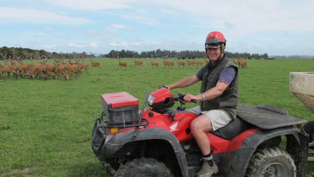 Tangimoana deer farmer Andy Russell with weaner stags.