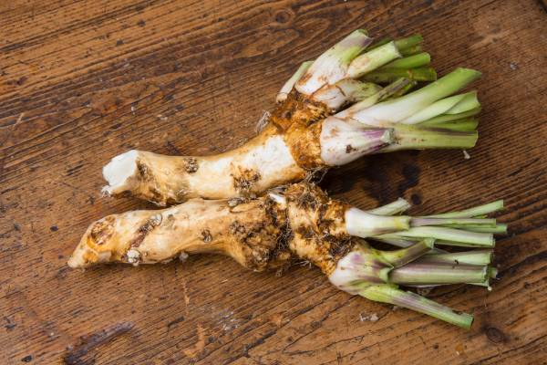 Horseradish can be invasive, so keep it in an area that's confined. Plant root cuttings or new plants in a sunny spot in ...