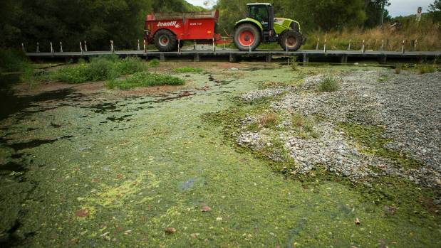 Canterbury's Selwyn River full of river weed and at a low water flow in February. Water levels have since improved, but ...