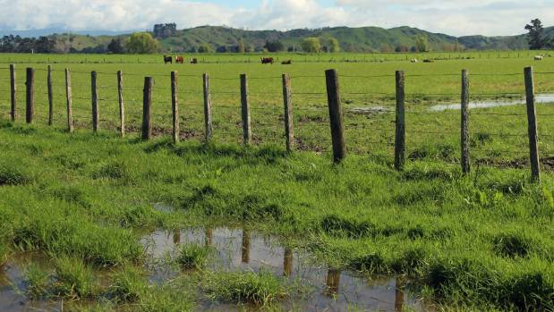 It is wet under hoof... the Wairarapa farm of Nathan and Kate Williams has received its average rainfall for the year ...