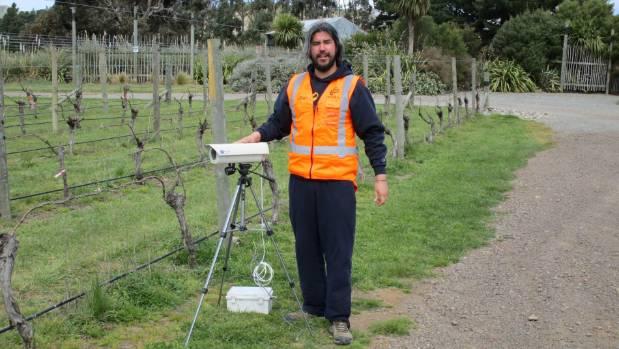 Chilean researcher Mauricio Gonzalez-Chang in Kono's Awatere Valley vineyard.