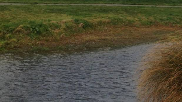 """The Silverstream waterway has nitrate levels """"well beyond"""" being environmentally sound"""