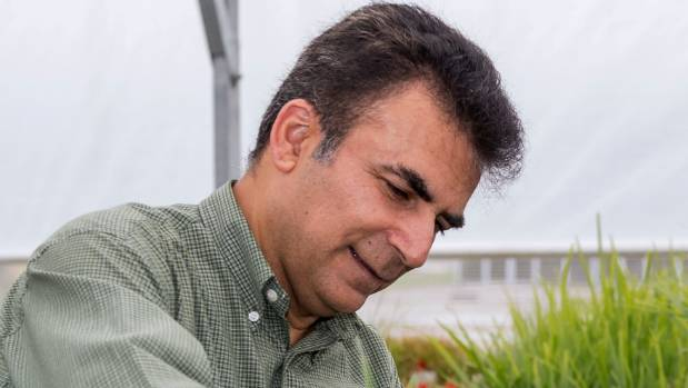 Dr Kioumars Ghamkhar is leading a project to see whether drones mounted with lasers can be used as a tool to eradicate weeds.