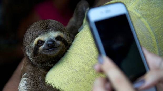 Why your next selfie with a koala may trigger an Instagram warning