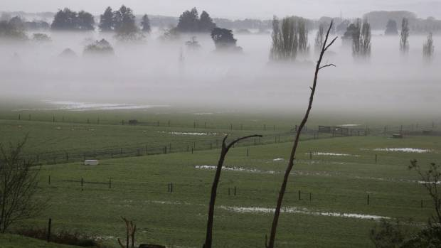Waikato's wet weather is affecting both farmers and livestock.
