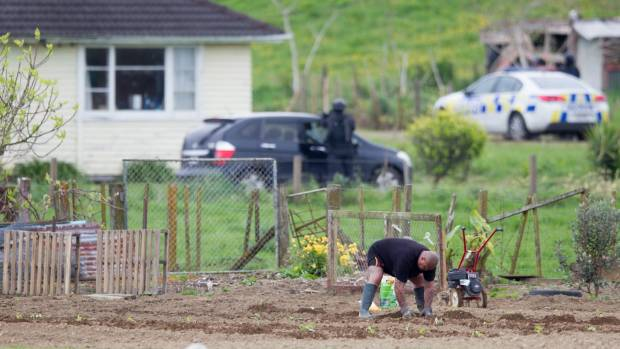 A man tends his garden while armed police swoop on a house in Whatawhata, Hamilton.