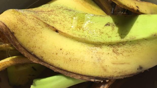 Banana peels and water are all you need to make these simple fertilisers.