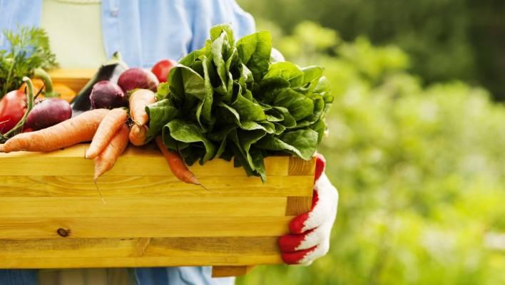 5 homemade liquid fertilisers your plants will relish